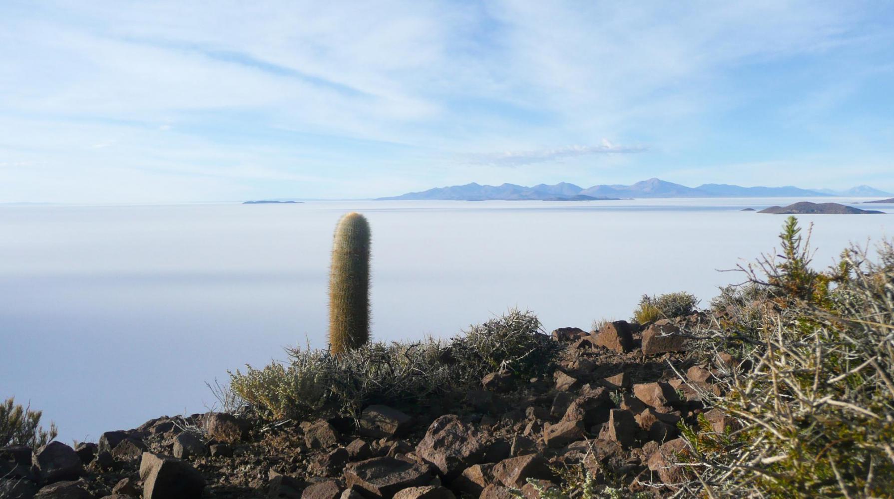 Lomo del pesacado Bolivie Désert Uyuni