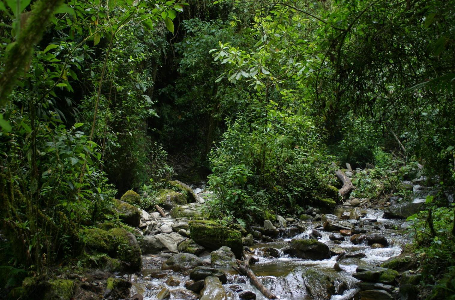 trek jungle colombie cafe