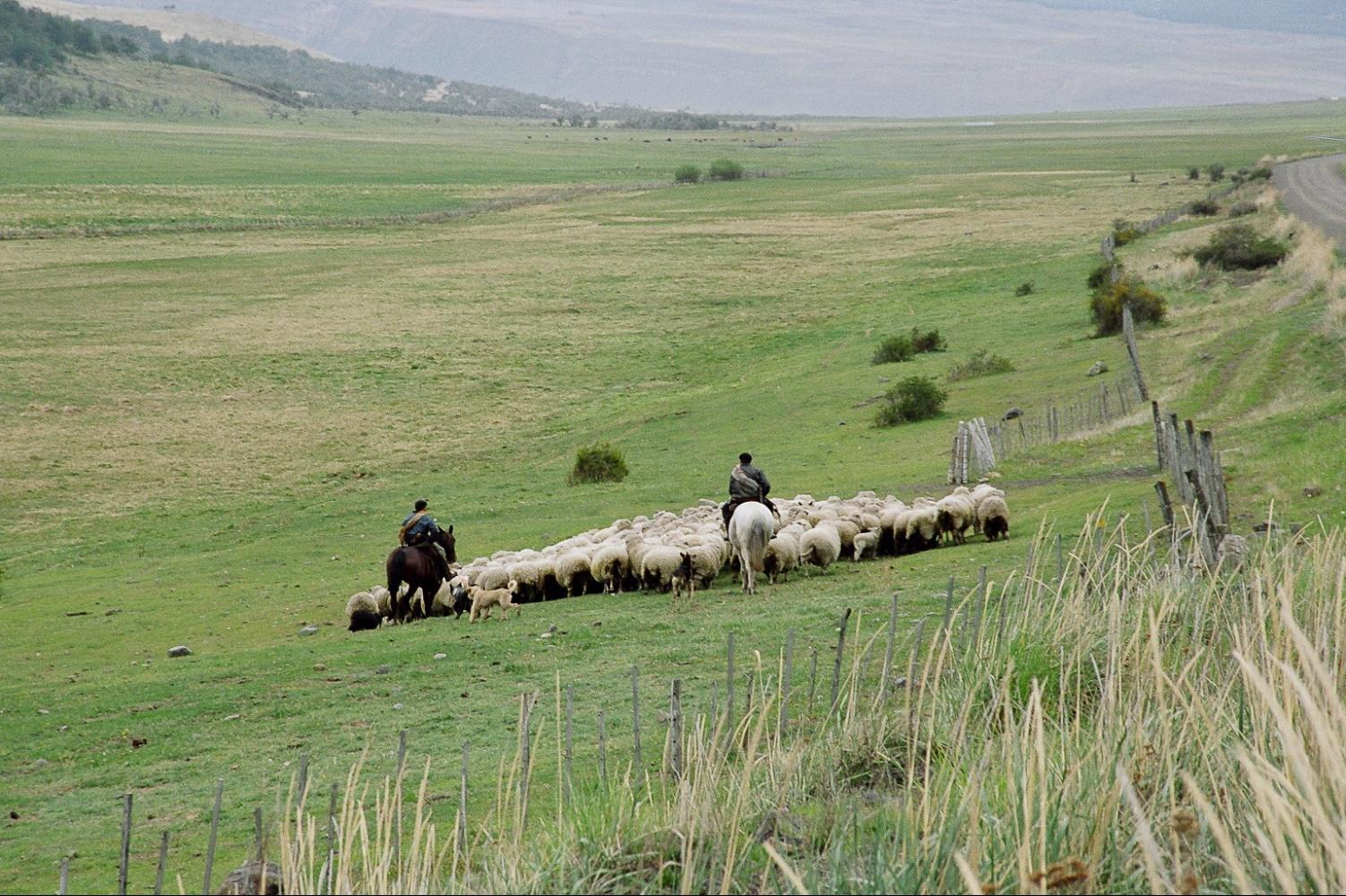 gauchos patagonie voyage