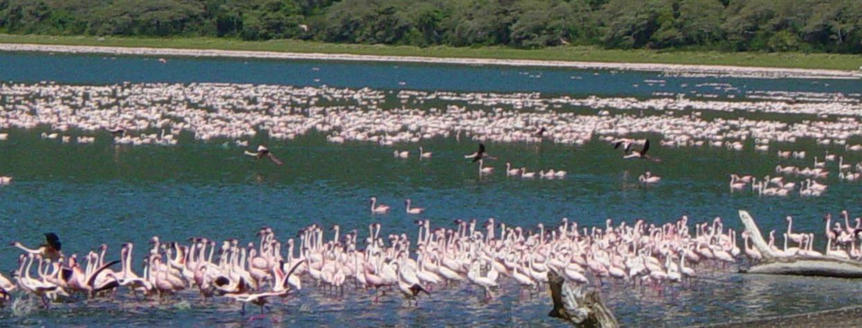 © Voyage nature Tanzanie