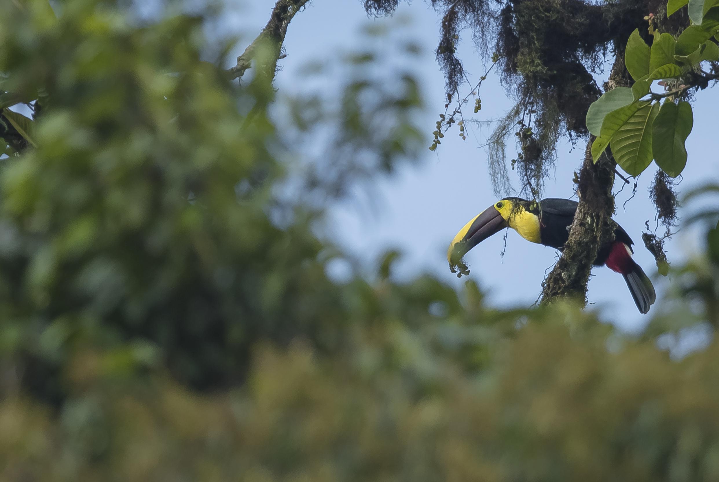 © observation oiseaux équateur