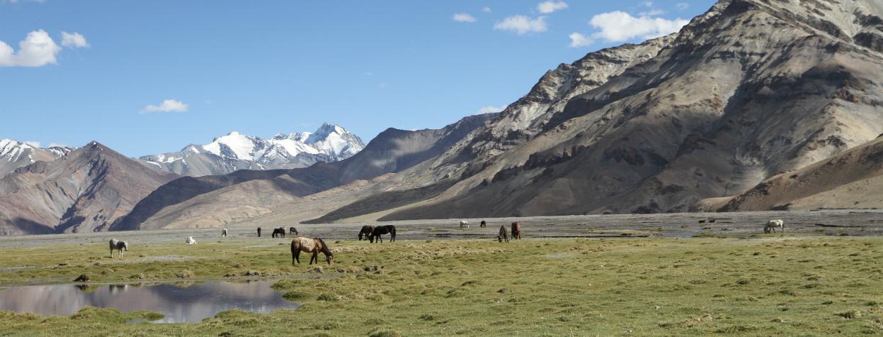 © Trek au Ladakh
