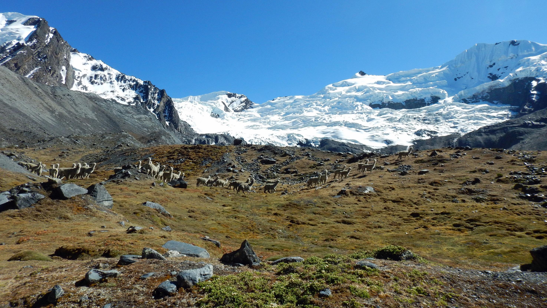 glacier trek andes